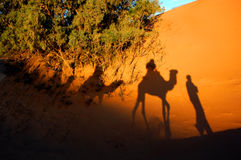 Camel shadows in a desert. Camel caravan shadows in Sahara desert Stock Photo