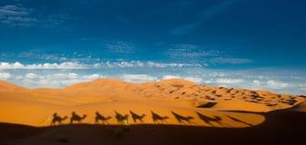 Camel shadows in the sahara. Shadows of a Camel Caravan on the sand dunes of the Sahara Desert stock photo