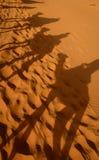 Camel shadows in the sahara desert stock image