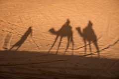 Camel shadows on Sahara Desert sand in Morocco. Royalty Free Stock Photo