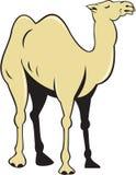 Camel Side View Cartoon Stock Photos