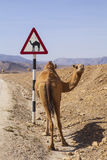 Camel sign Royalty Free Stock Images