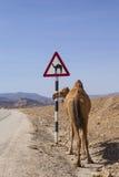 Camel sign Royalty Free Stock Photos
