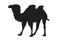 Camel silhouette. On a white isolated background Royalty Free Stock Photos
