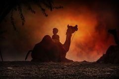Camel silhouette in Pushkar stock images