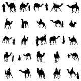 Camel silhouette set Stock Photos