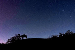 Camel silhouette in the starry night Royalty Free Stock Photos