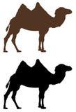 Camel silhouette stock illustration