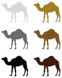 Camel silhouette - wildlife animal royalty free illustration
