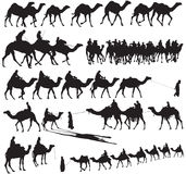 Camel Silhouettes. For your design Royalty Free Stock Images