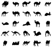 Camel silhouettes set Stock Photo