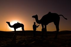 Camel silhouettes at sunrise Royalty Free Stock Images