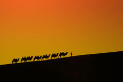 Camel Silk Road journey in the desert Xinjiang, China. Caravan camels journey with a man in the desert silhouette on a beautiful yellow background Royalty Free Stock Images
