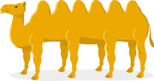 Camel with six humps. Illustration cartoon Stock Images
