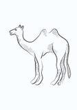 Camel sketch Stock Image