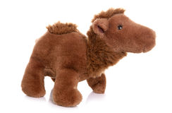 Camel soft toy. On white background Stock Photography