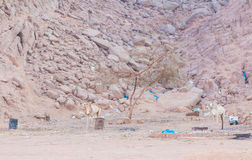 Camel standing in the desert in the background debris Stock Photos
