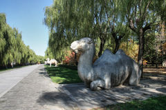 Camel statue on the Ming Tomb Alley, China Royalty Free Stock Image