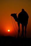 Camel at sunset Royalty Free Stock Images