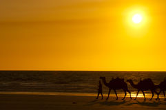 Camel Sunset - Cable Beach - Broome - Australia Royalty Free Stock Images