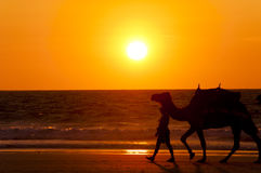 Camel Sunset - Cable Beach - Broome - Australia Royalty Free Stock Photography