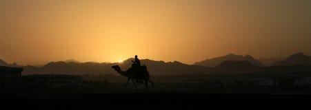 Camel at sunset in Sinai mountains. Bediun on his camel at sunset over Sinai mountains - Egypt Stock Image
