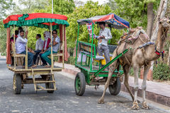 Camel taxi Royalty Free Stock Photography