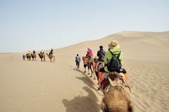 Camel team in Singing Sands Mountain Royalty Free Stock Images