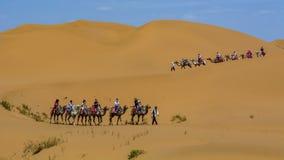 Camel team wearing masks