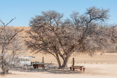 Camel Thorn tree at the Kamqua picnic site Royalty Free Stock Photos