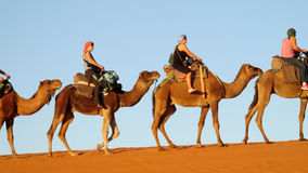 Camel tourist caravan in desert royalty free stock image