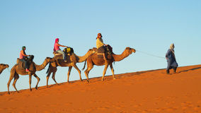 Camel tourist caravan in desert Stock Photography
