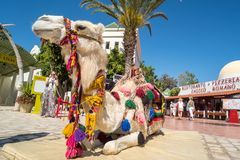 Camel for tourist ride in Hammamet Tunisia
