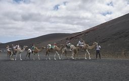Camel tours in Timanfaya park royalty free stock images
