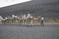 Camel tours in Timanfaya park. Lanzarote, Spain - August 24, 2015 : Camel tours in Timanfaya park in Lanzarote Stock Photography