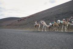 Camel tours in Timanfaya park. Lanzarote, Spain - August 24, 2015 : Camel tours in Timanfaya park in Lanzarote Stock Photo