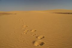 Camel traces in the desert Royalty Free Stock Images