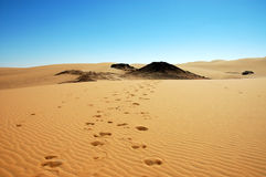 Camel tracks. In the desert near Dakhla Oasis, Egypt Royalty Free Stock Images