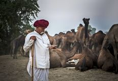 Camel trader in pushkar camel fair. Unidentified person and a trader in pushkar camel tradee fair in rajasthan, india on november 2015 Stock Images