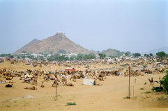Camel Fair, Pushkar India Stock Photos