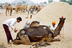 Camel Decoration, Pushkar India royalty free stock images
