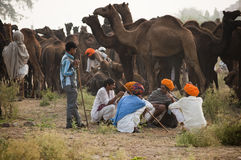 Camel traders of pushkar. Rajasthan, India wearing yellow turban sitting on the fair ground Royalty Free Stock Photo
