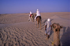 Camel train Royalty Free Stock Photo
