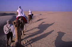Camel train. In the desert Stock Photography