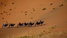 A camel train in Gobi desert stock photo