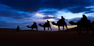 Camel train silhouetted colorful sky Sahara desert Royalty Free Stock Photo