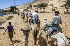 A camel train with tourists aboad head along the west bank of the River Nile in Egypt. Stock Photo