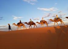Camel trek in Sahara. stock photos