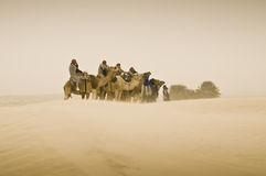 Camel trekking Royalty Free Stock Photography