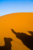 Camel trekking Morocco Stock Images